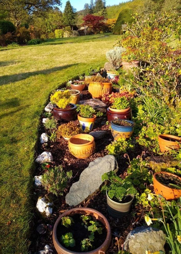 Herb garden in morning sun.
