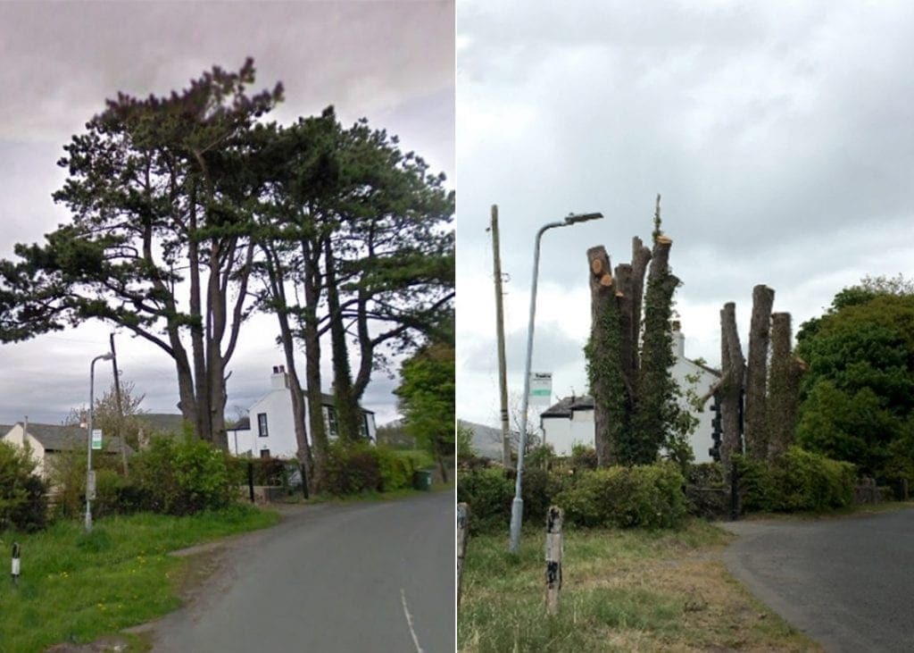 The 'iconic' Scots Pines before (left) and after (right) they were lopped