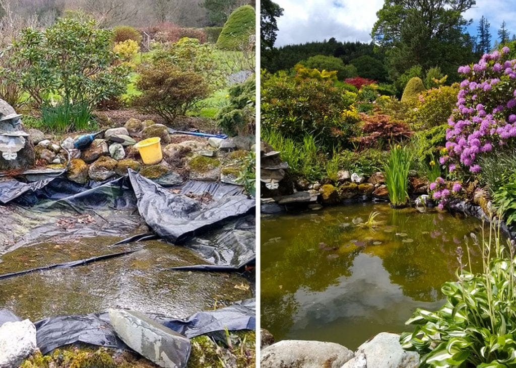 The pond in week 1 (left) and week 12 (right).